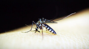Dengue: Most Dangerous Disease in the Current Times