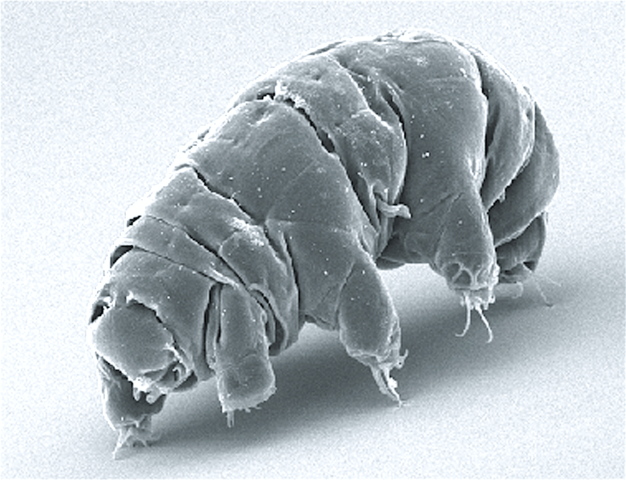 626px-SEM_image_of_Milnesium_tardigradum_in_active_state_-_journal-1527774048.png