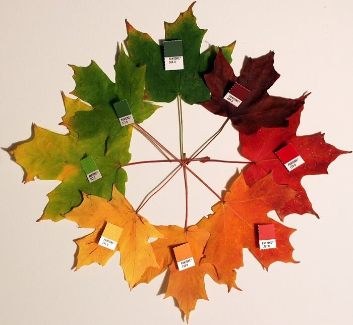 Autumn_leaves_(pantone)_crop-1497529590.jpg
