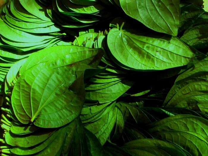 Betel_leafs_Selling-1499689356.jpg