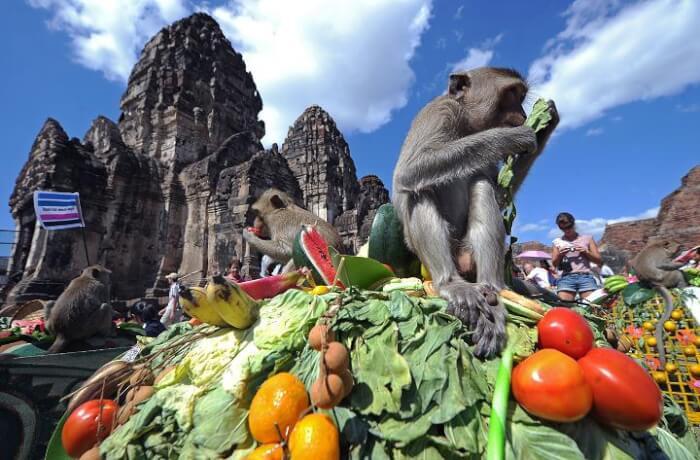 Monkey_Buffet_Festival_1-1506254404.jpg
