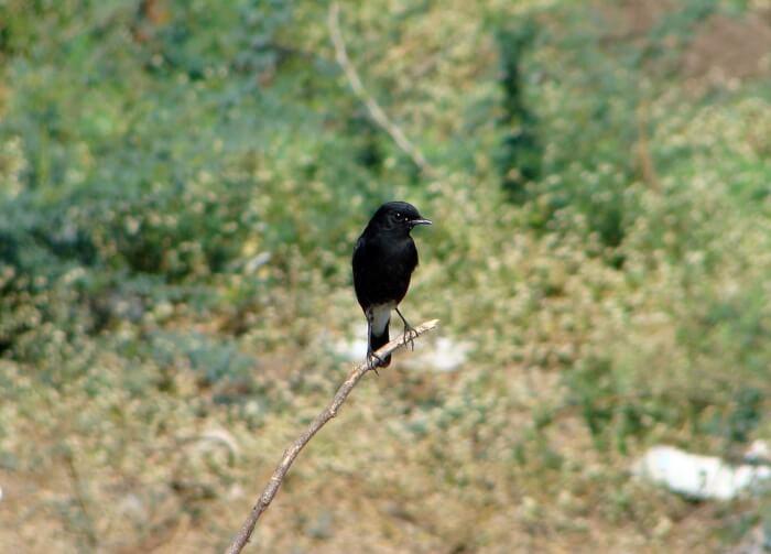 bird-175245_1280-1510486748.jpg