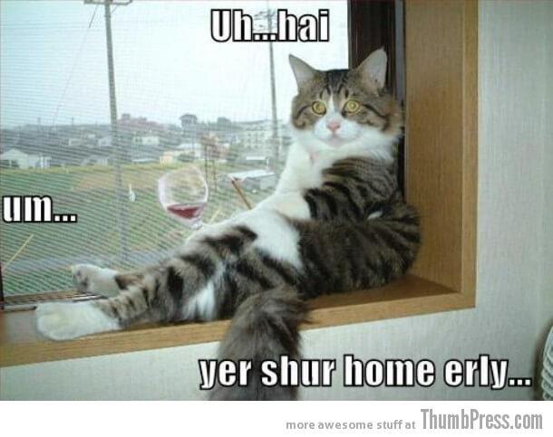 cat-6-1514627153.jpg