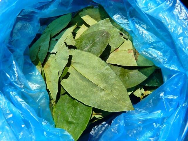 coca-leaves-43289_640(1)-1510571209.jpg