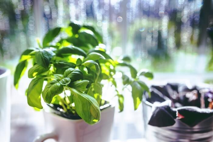 cup-leaf-spring-leaves-1493314796.jpg