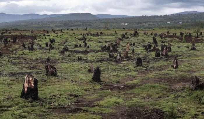 deforestation-1523008625.jpg