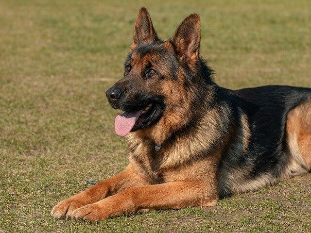 dog-2144031_640-1517129058.jpg