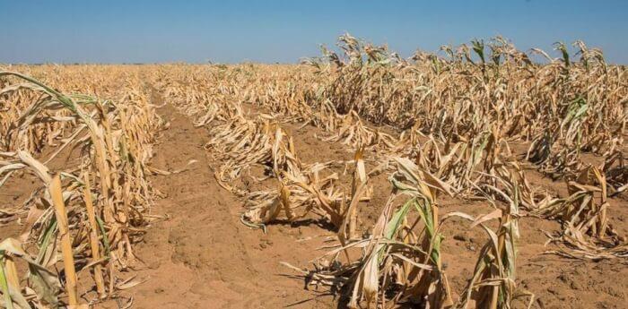 dry-crops21459841125887_aspR_2-1506350239.jpg