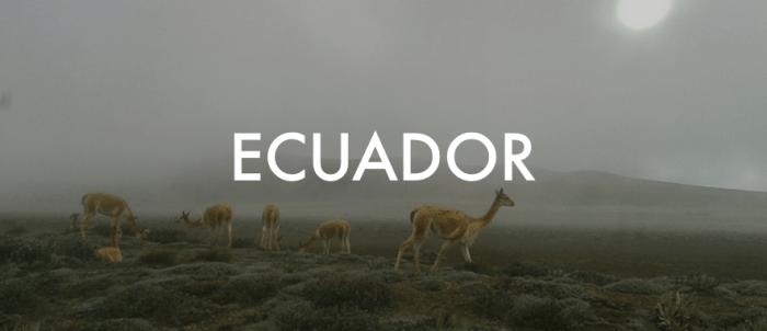 ecuadorpng-3280100029-71-lg-1514452654.png