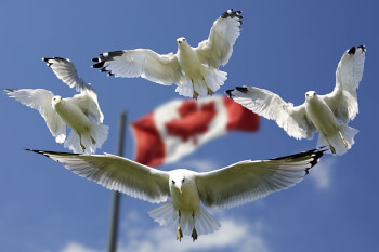 Strange Things to Know about Canada that will Blow Your Mind!