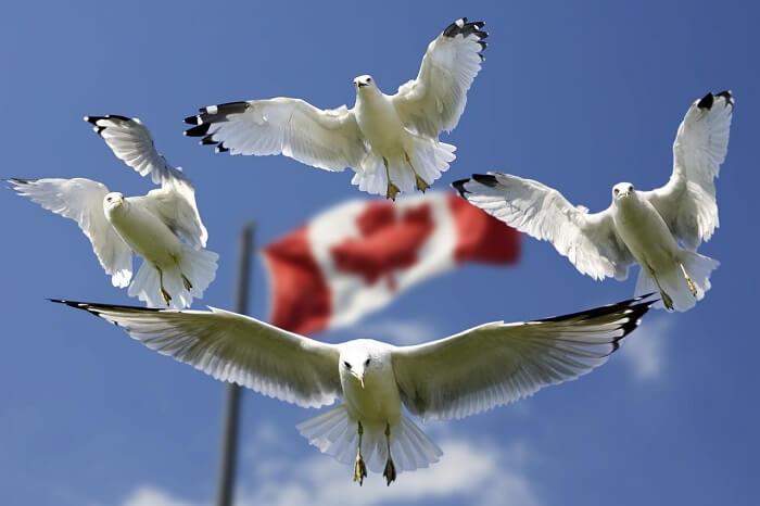 gulls-540791_1280-1497295323.jpg