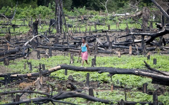 liberia-forest_2583622k-1523008704.jpg