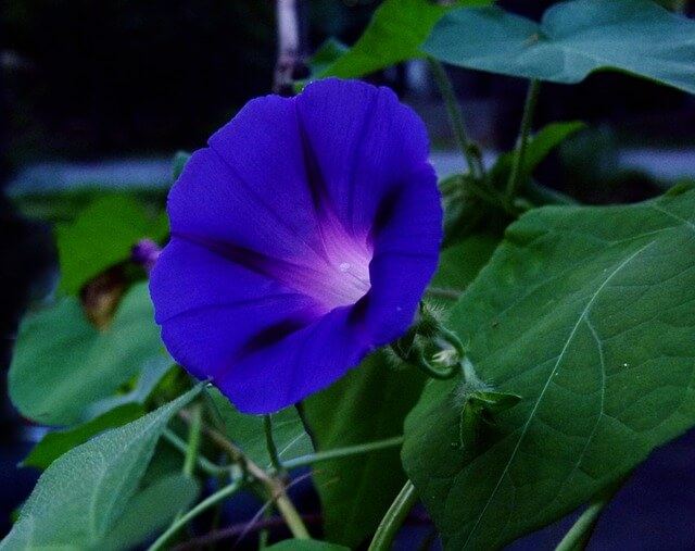 morning-glory-2684455_640-1510571250.jpg