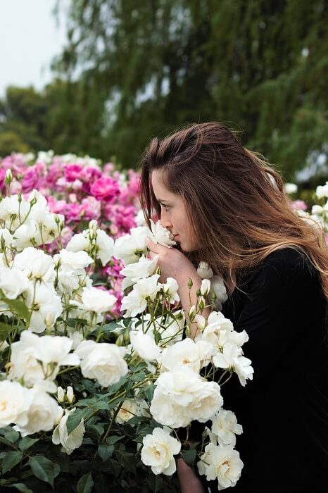 sniffing-flowers-1348656_1280-1495085087.jpg